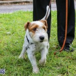 SPCA Paws To The Park Bermuda, March 1 2015-67
