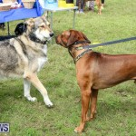 SPCA Paws To The Park Bermuda, March 1 2015-70