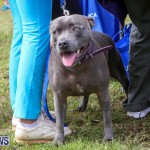 SPCA Paws To The Park Bermuda, March 1 2015-73