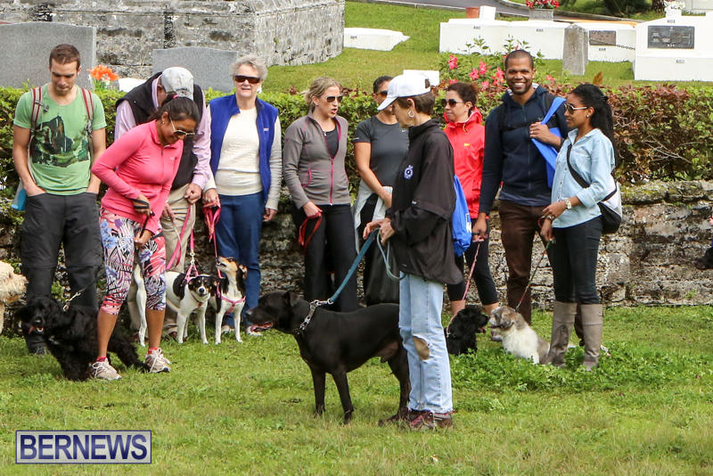 SPCA-Paws-To-The-Park-Bermuda-March-1-2015-81
