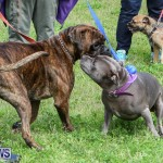 SPCA Paws To The Park Bermuda, March 1 2015-93