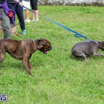 SPCA Paws To The Park Bermuda, March 1 2015-94