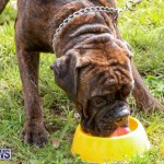 SPCA Paws To The Park Bermuda, March 1 2015-99