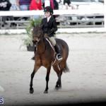 equestrian 2015 Feb 2 (1)
