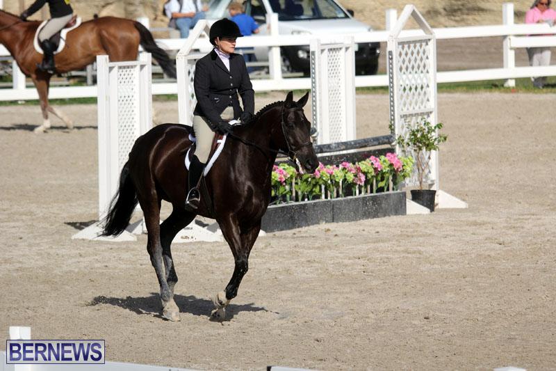 equestrian-2015-Feb-2-11