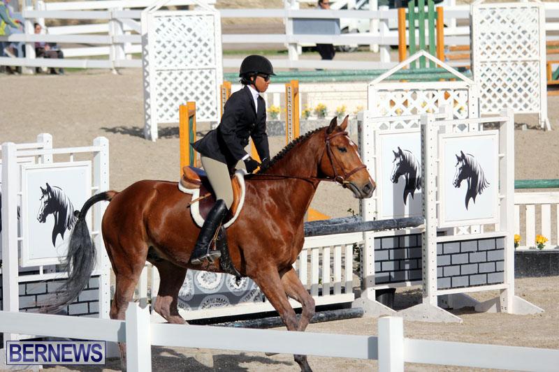 equestrian-2015-Feb-2-12
