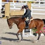 equestrian 2015 Feb 2 (13)