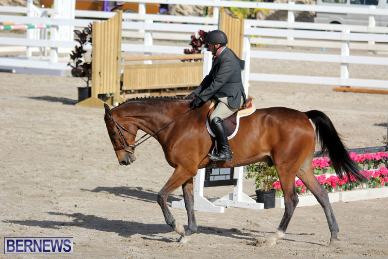 equestrian-2015-Feb-2-13