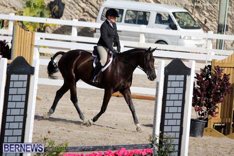 equestrian-2015-Feb-2-14