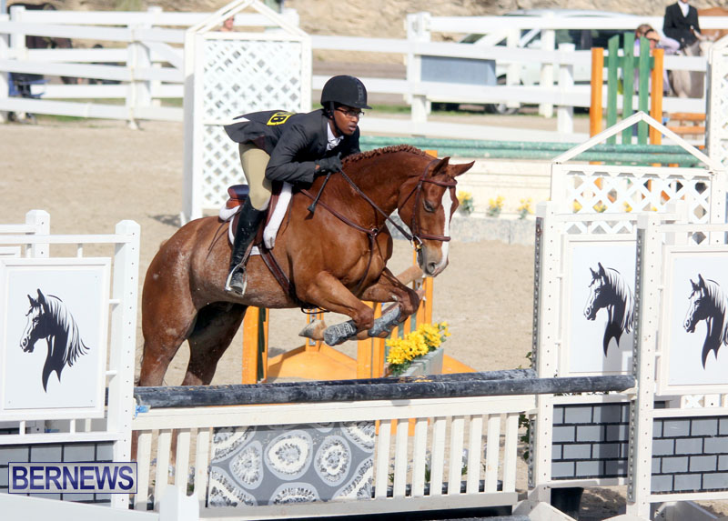equestrian-2015-Feb-2-15