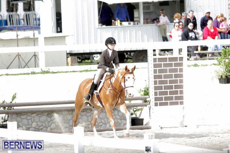 equestrian-2015-Feb-2-4