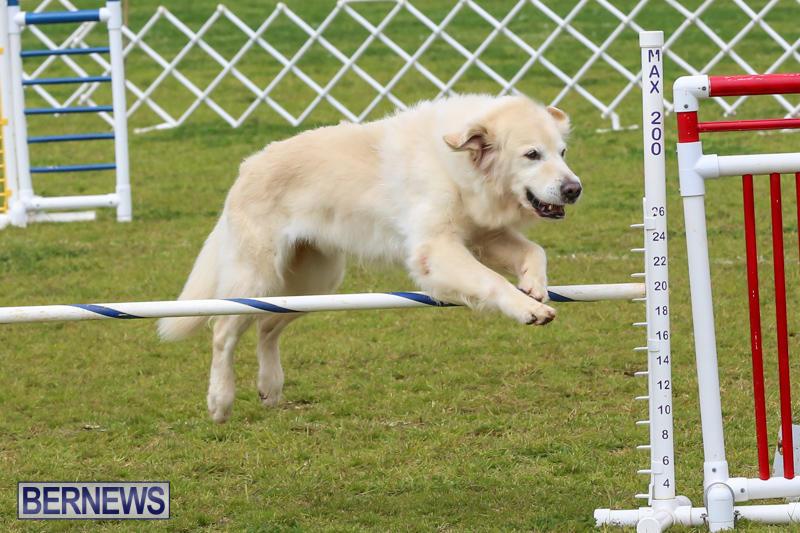 Dog-Agility-Trials-Bermuda-March-28-2015-1