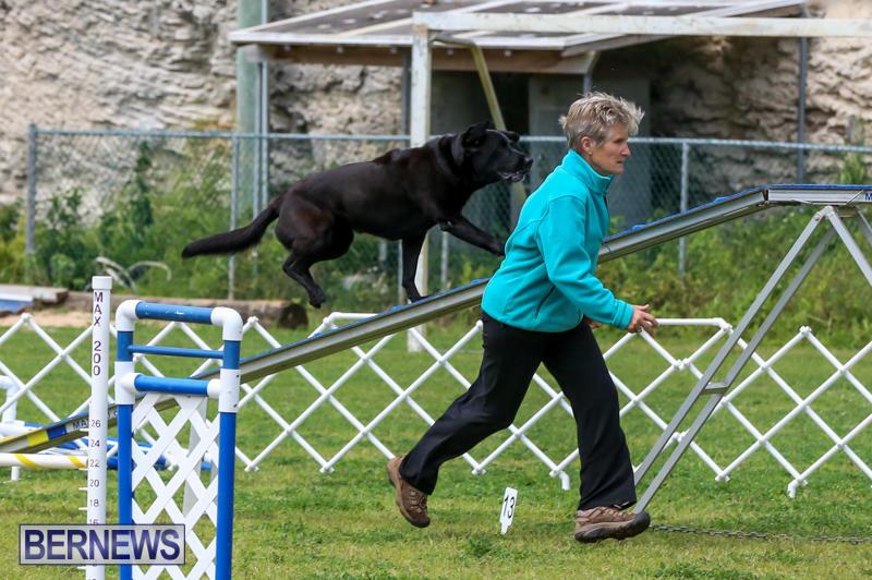 Dog-Agility-Trials-Bermuda-March-28-2015-100