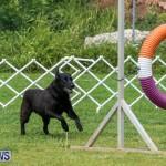 Dog Agility Trials Bermuda, March 28 2015-101