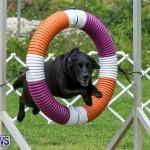 Dog Agility Trials Bermuda, March 28 2015-102