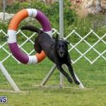 Dog Agility Trials Bermuda, March 28 2015-103
