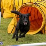 Dog Agility Trials Bermuda, March 28 2015-105