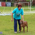 Dog Agility Trials Bermuda, March 28 2015-109
