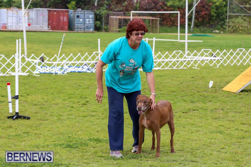 Dog-Agility-Trials-Bermuda-March-28-2015-109