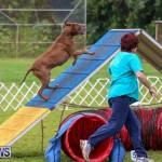 Dog Agility Trials Bermuda, March 28 2015-110