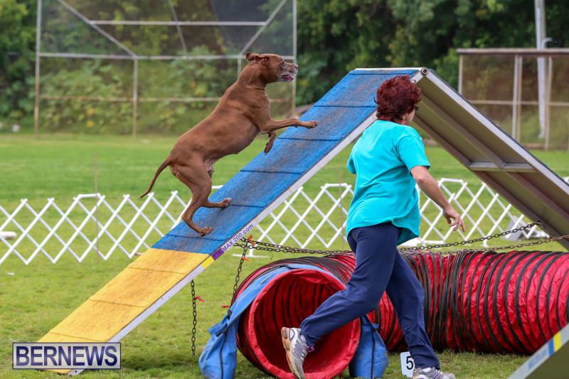 Dog-Agility-Trials-Bermuda-March-28-2015-110