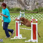 Dog Agility Trials Bermuda, March 28 2015-112