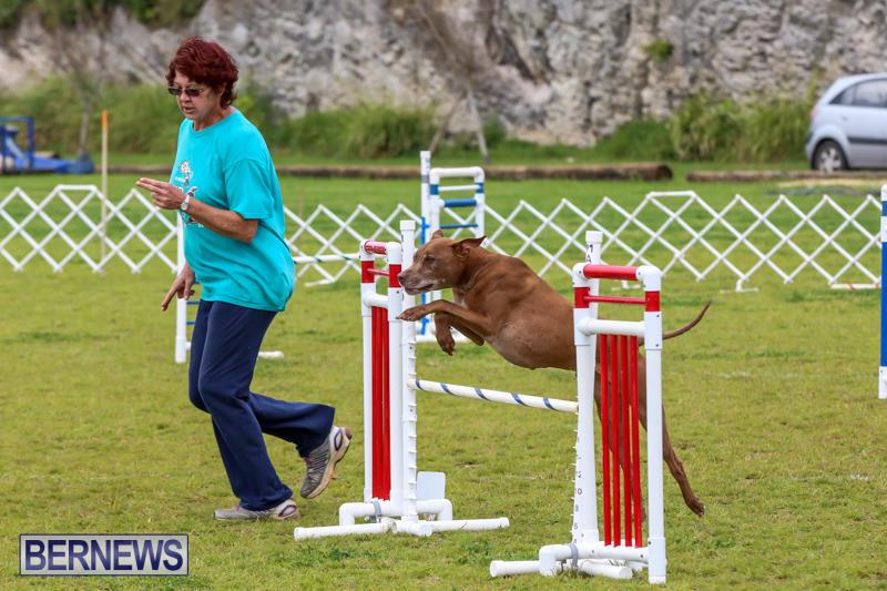 Dog-Agility-Trials-Bermuda-March-28-2015-112