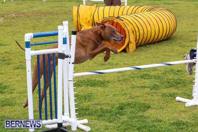 Dog-Agility-Trials-Bermuda-March-28-2015-117