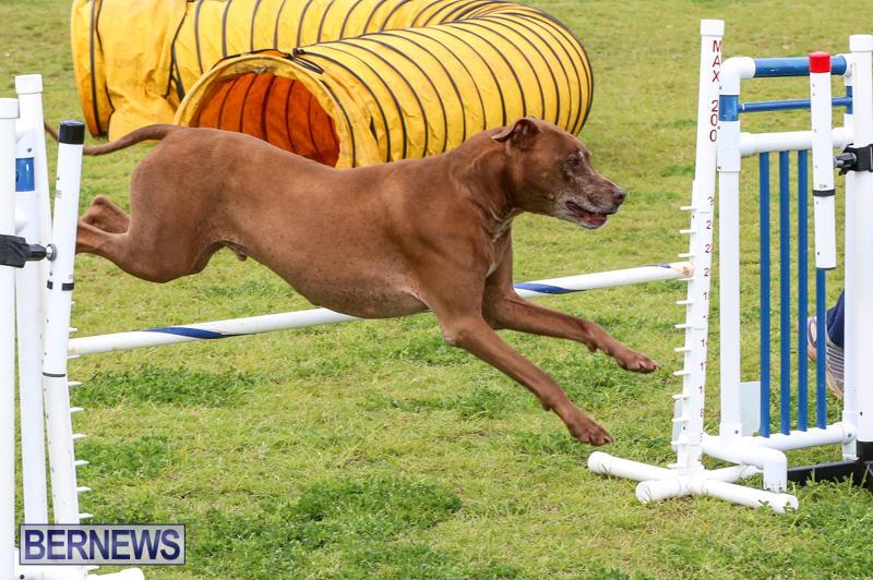 Dog-Agility-Trials-Bermuda-March-28-2015-118