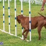Dog Agility Trials Bermuda, March 28 2015-120