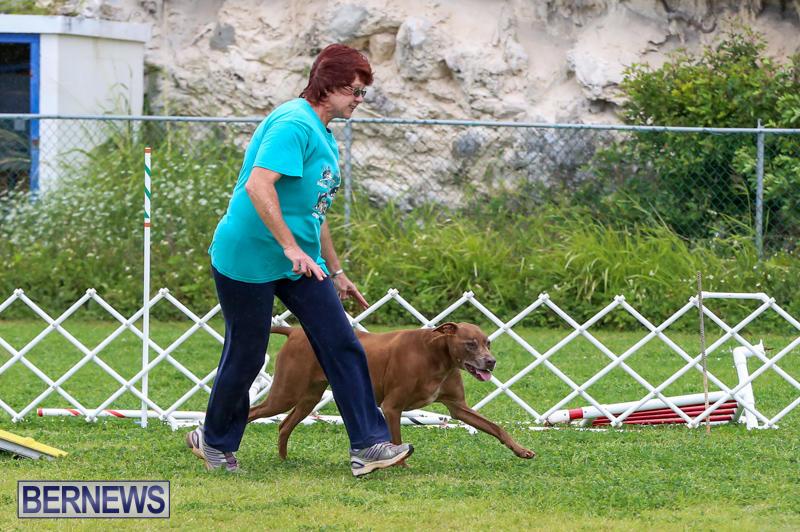Dog-Agility-Trials-Bermuda-March-28-2015-125