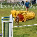 Dog Agility Trials Bermuda, March 28 2015-128