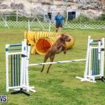 Dog Agility Trials Bermuda, March 28 2015-129