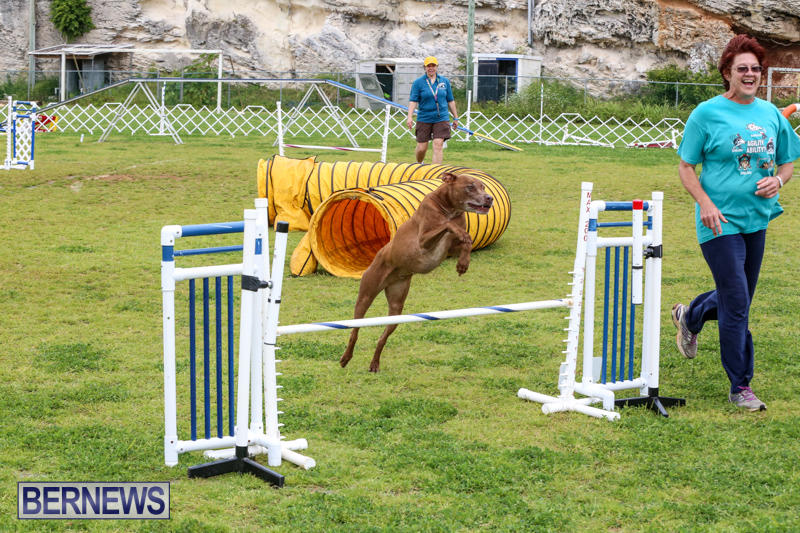 Dog-Agility-Trials-Bermuda-March-28-2015-129