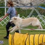 Dog Agility Trials Bermuda, March 28 2015-14