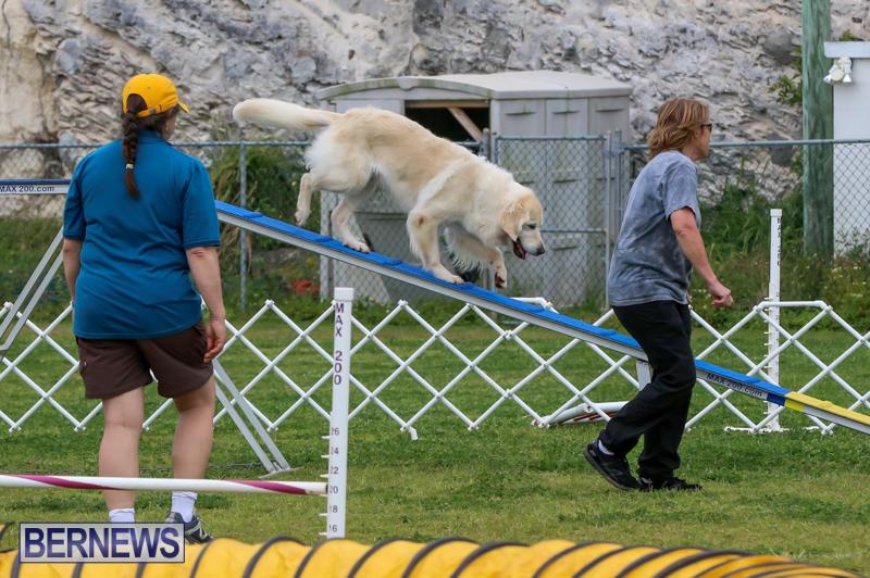 Dog-Agility-Trials-Bermuda-March-28-2015-16