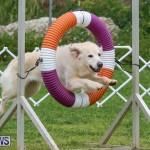 Dog Agility Trials Bermuda, March 28 2015-17