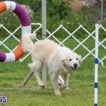 Dog Agility Trials Bermuda, March 28 2015-18