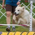 Dog Agility Trials Bermuda, March 28 2015-19