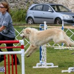 Dog Agility Trials Bermuda, March 28 2015-2