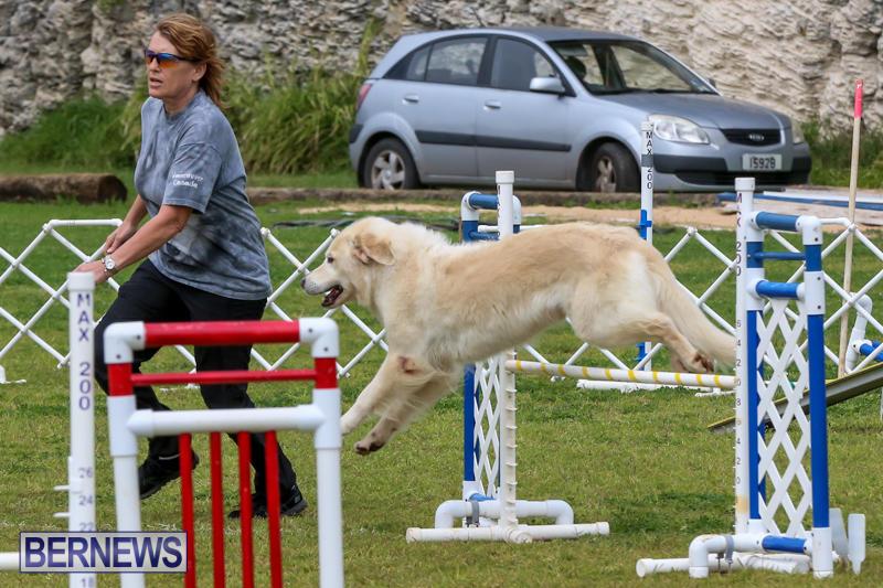 Dog-Agility-Trials-Bermuda-March-28-2015-2