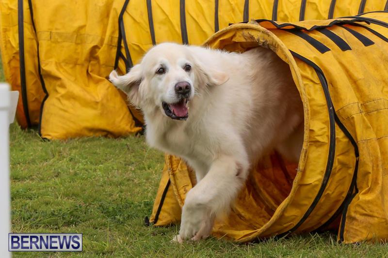 Dog-Agility-Trials-Bermuda-March-28-2015-20