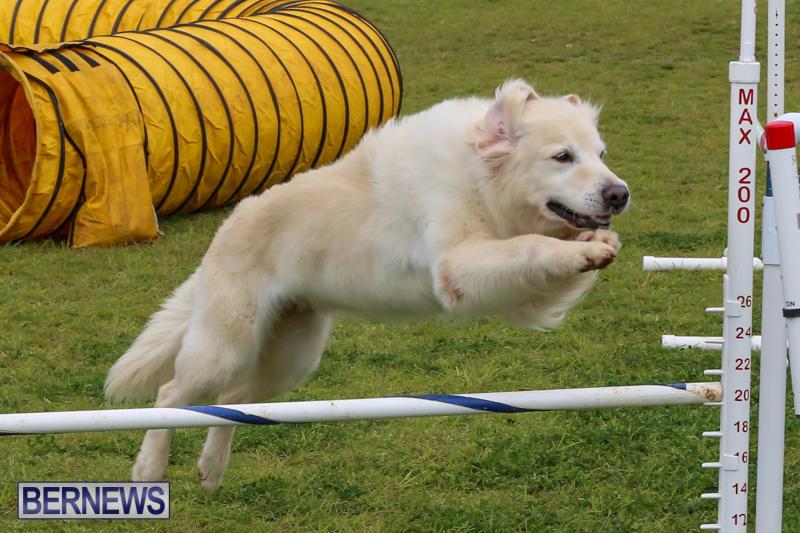Dog-Agility-Trials-Bermuda-March-28-2015-22