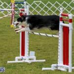 Dog Agility Trials Bermuda, March 28 2015-25