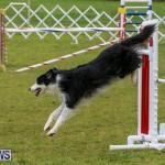 Dog Agility Trials Bermuda, March 28 2015-26