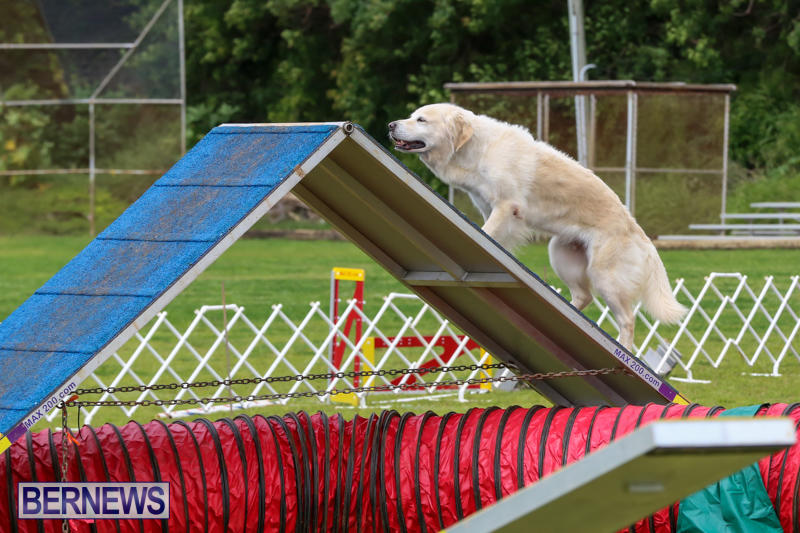 Dog-Agility-Trials-Bermuda-March-28-2015-3
