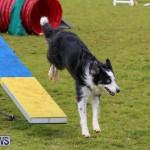 Dog Agility Trials Bermuda, March 28 2015-30