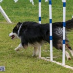 Dog Agility Trials Bermuda, March 28 2015-34