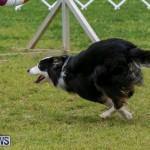Dog Agility Trials Bermuda, March 28 2015-35