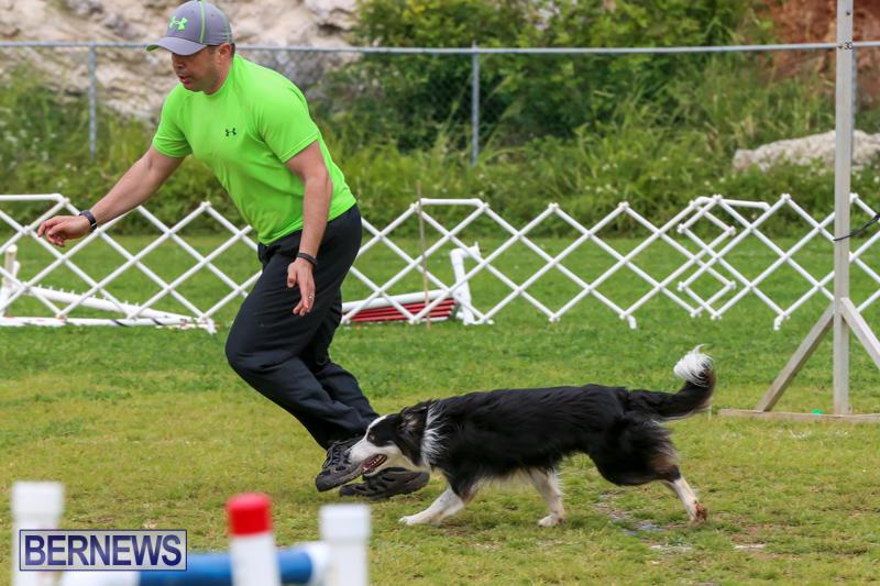 Dog-Agility-Trials-Bermuda-March-28-2015-36